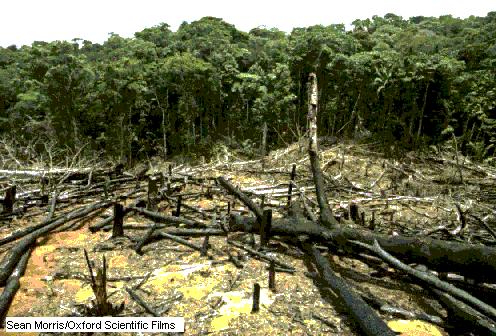 Sistema de tala y quema aun usado en la actualidad