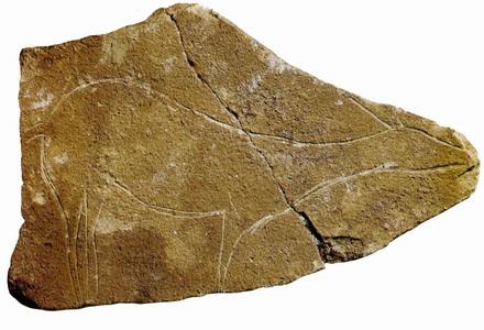 Hallazgos de la cueva del Parpalló, del paleolítico superior
